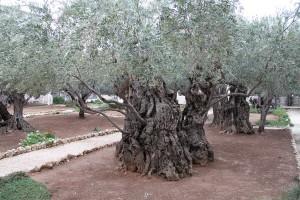 gethsamen gardens