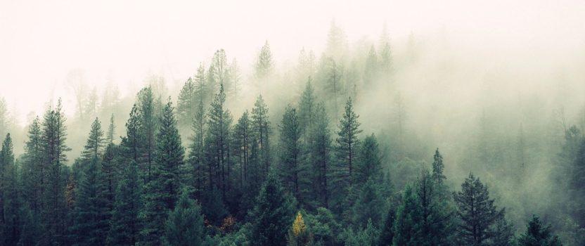 November Update – trekking in the rain